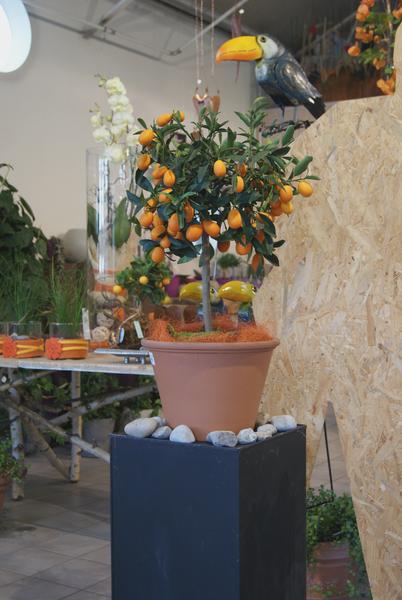 Außergewöhnlich Mietpflanzen Shop - Blumenland Schweiz #PC_16